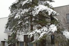 Sníh11