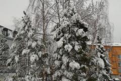 Sníh21