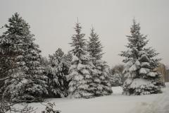 Zimní Suchdol