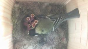 ptaci domacnost
