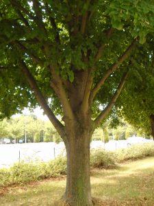 stromovi-2